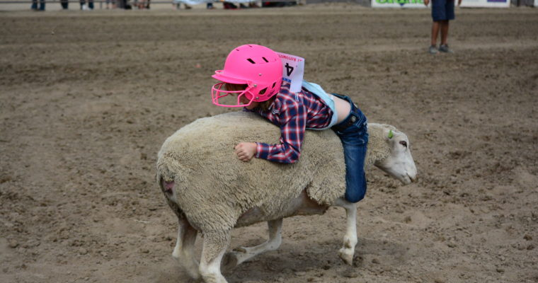 Mutton Bustin', Calf Riding and Steer Riding Finalists