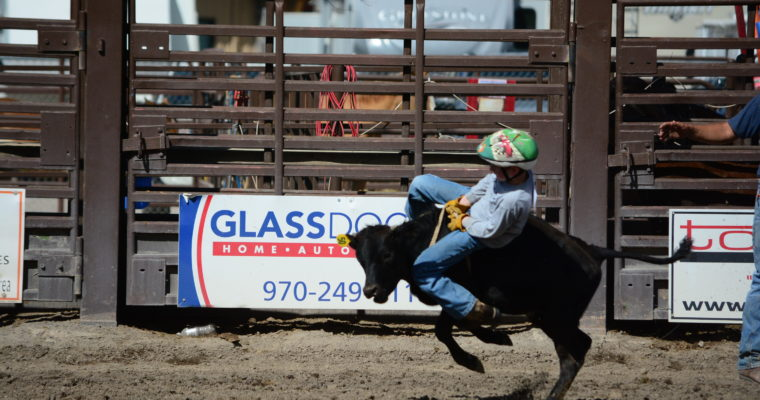 Mutton Bustin', Calf, and Steer Riding Champions