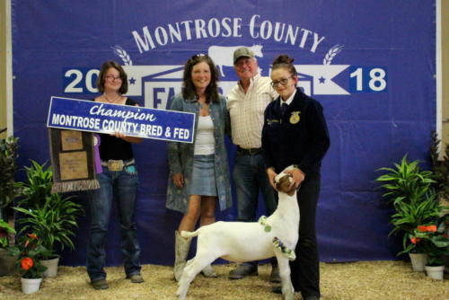 Grand Champion Bred & Fed Market Goat - Sydney McCullough - D'Medici Footwear