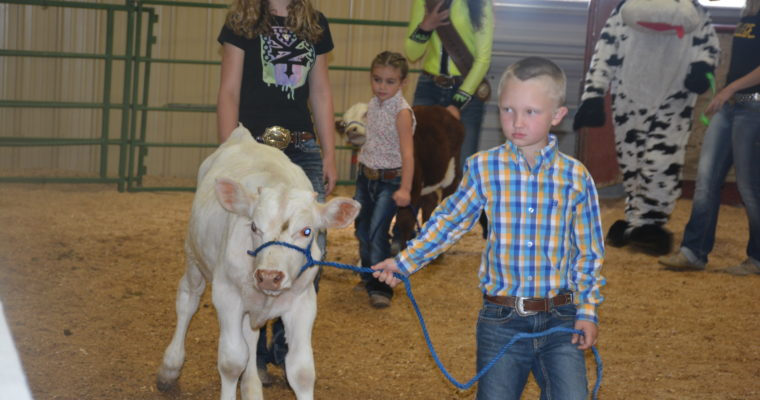 Fair 2017 Photos