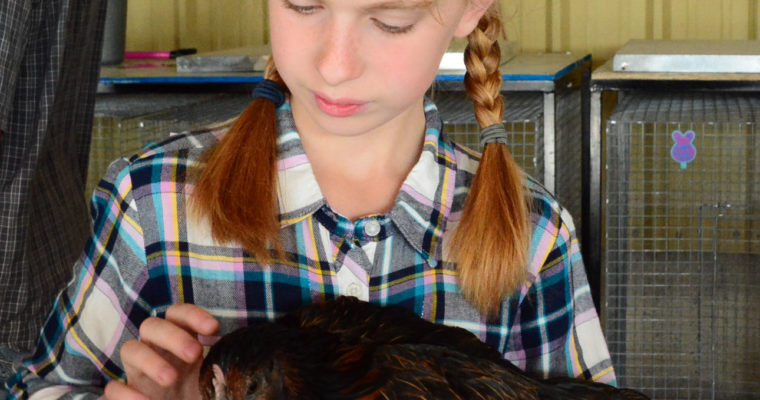Entries for Jr., Open Livestock, and Poultry Shows Due Friday